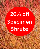 20% Discount On Specimen Shrubs